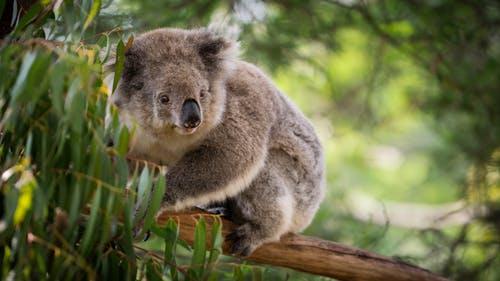 澳大利亚移民周报 | 澳洲明年启用入境新规则