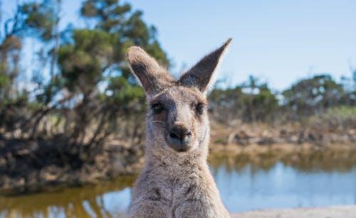 澳洲移民的难度特别大,但是依旧还有人选择移民
