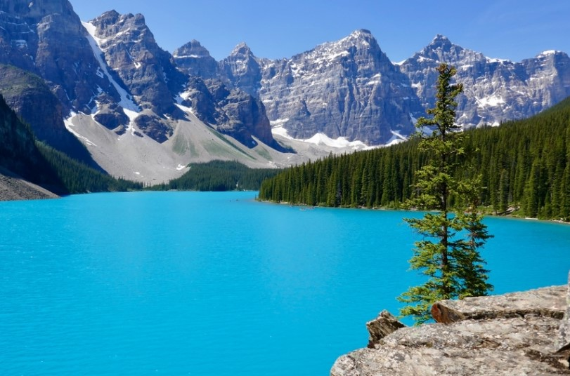 去加拿大应该如何选专业?看这一篇就够了!
